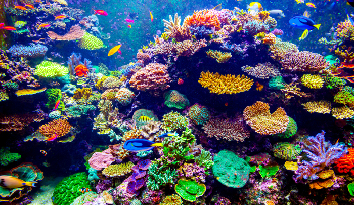 Great Barrier Reef Authority Sees 'Vibrant Future' Ahead