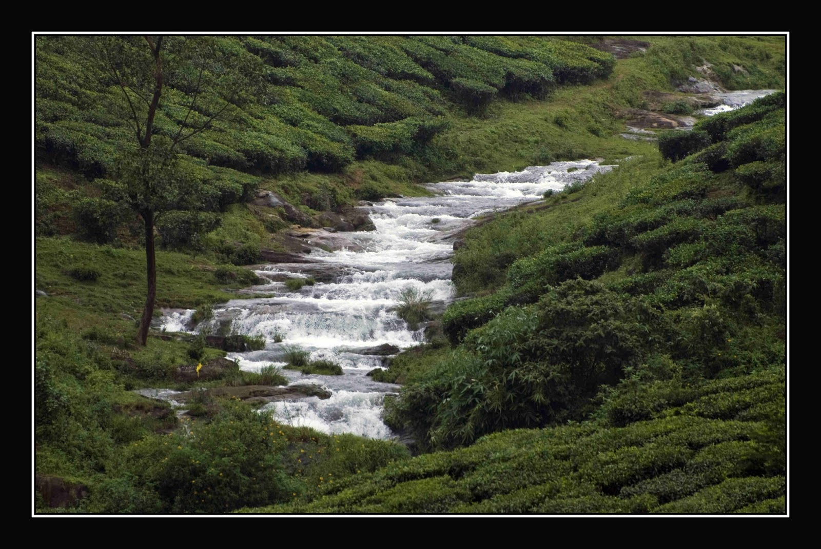 the-role-of-mountain-streams-in-carbon-cycle-newly-assessed