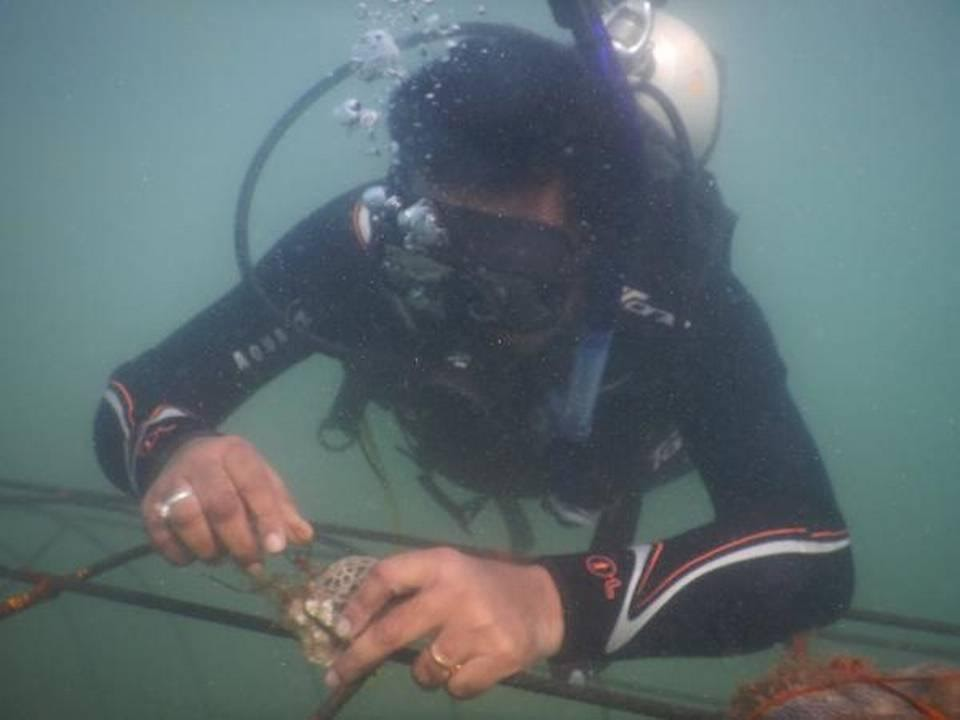 a-bid-to-restore-coral-reefs-using-biorocks