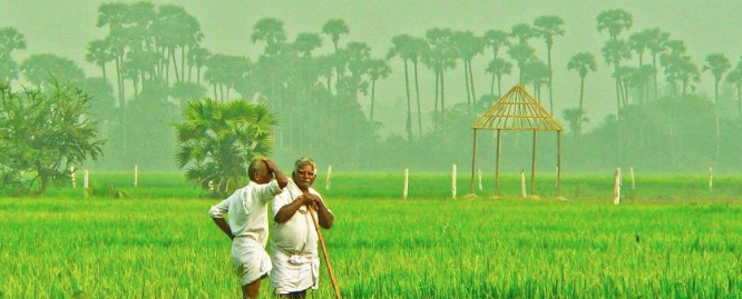 ccea-approves-scheme-for-formation-and-promotion-of-farmer-producer-organizations