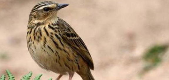 the-state-of-indias-birds-2020-assessment