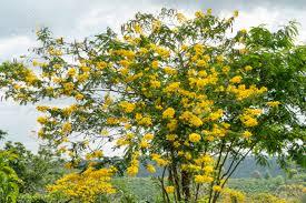 kerala-to-curb-alien-plants-growth