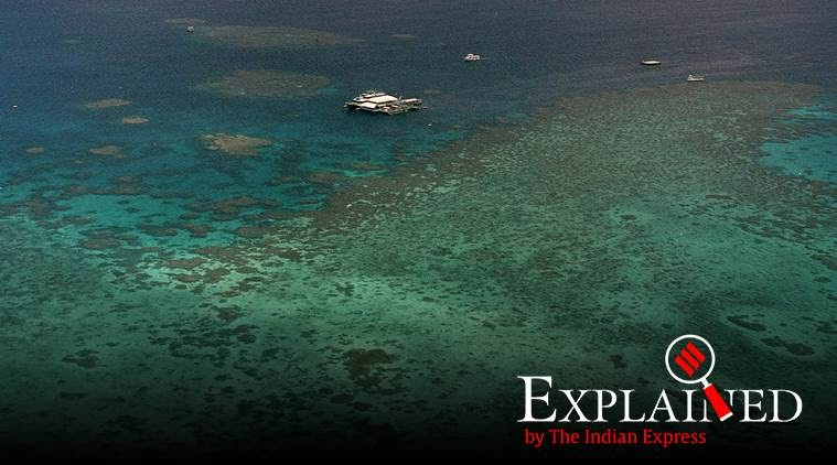 what-causes-coral-bleaching-at-the-great-barrier-reef-summary