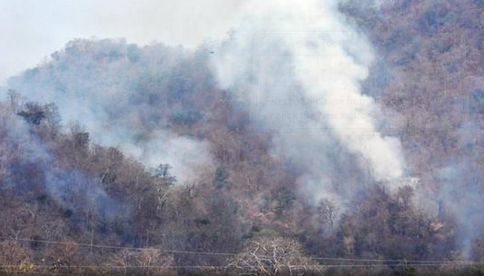 fires-ravages-forests-in-telangana