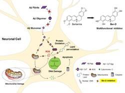 jncasr-scientists-develop-a-natural-product-based-alzheimer-inhibitor