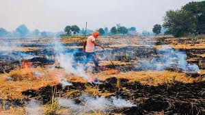 alternative-dwarfing-genes-in-wheat-can-eliminate-rice-crop-residue-burning-summary