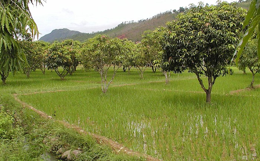 agroecology-and-natural-farming