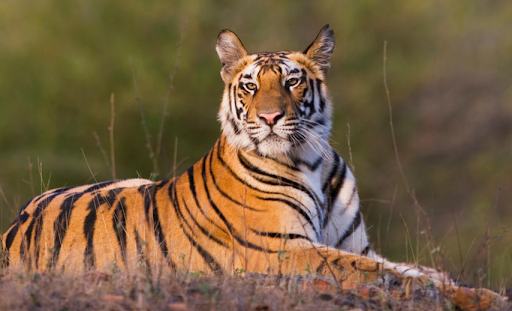 advisory-for-dealing-with-import-of-exotic-live-species-in-india