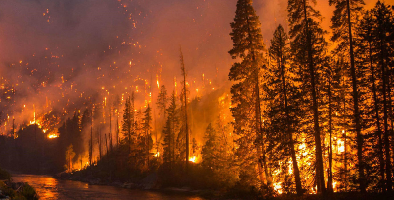 understanding-forest-fires-and-their-effect-on-carbon-emissions-summary