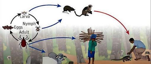 fewer-species-more-disease