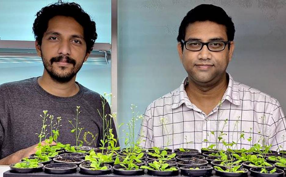iiser-bhopal-scientists-study-on-seed-germination-may-lead-to-crop-improvement-summary