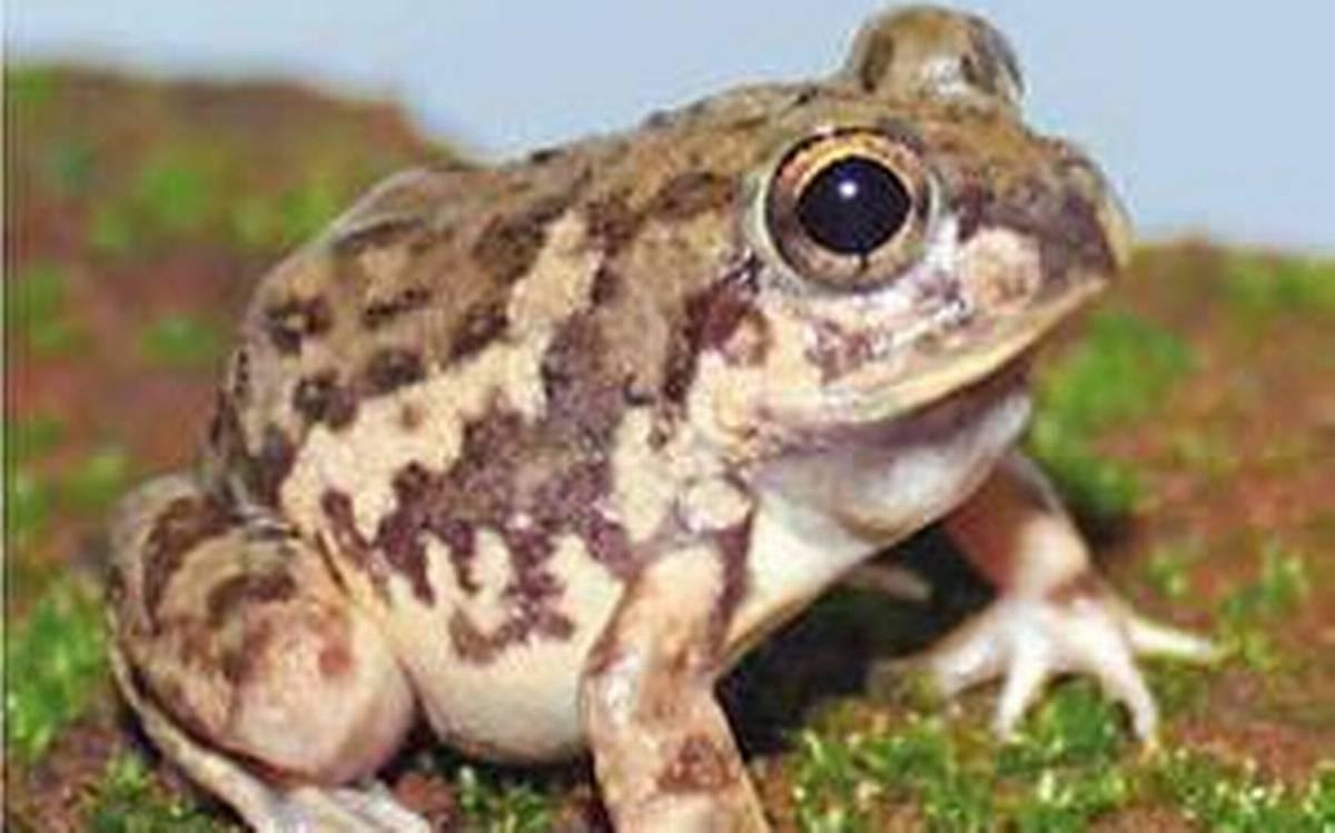 544-new-species-discovered-in-the-country-last-year-animals-and-plants-discoveries-2019-th