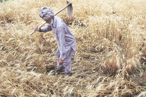 proportion-of-farmers-benefit-from-msp-th