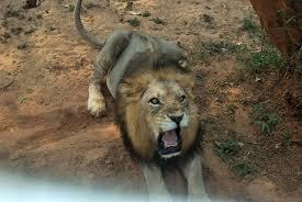 bhubaneswars-nandankanan-zoo-revives-adopt-an-animal-scheme