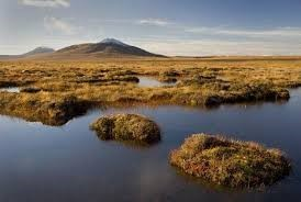 sustainable-peatland-management-can-prevent-future-pandemics-study-summary