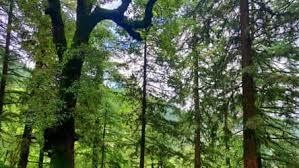 deemed-forests-what-are-they-and-why-karnataka-wants-to-declassify-some