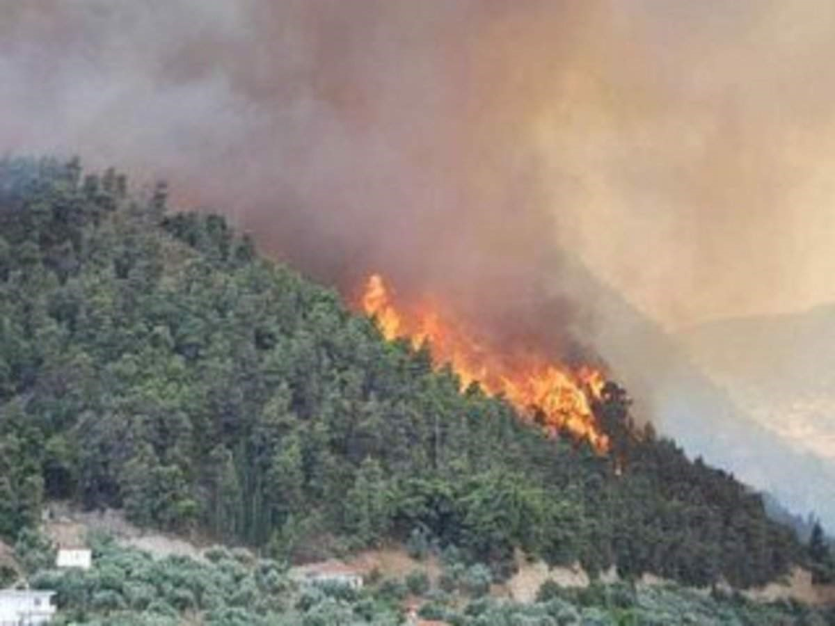 uttarakhand-forest-fires-in-chilling-winters-detailed-analysis-of-forest-fires-causes-effects-and-managements