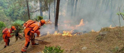 forest-fires-in-himachal-pradesh-during-winters