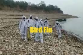 bird-flu-outbreak-in-india