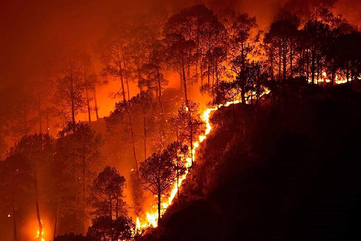the-simlipal-forest-fire-reason-and-concerns-summary
