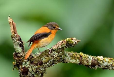 endemic-bird-day