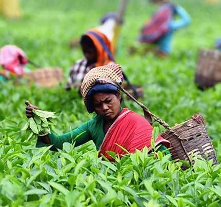 international-tea-day-auction