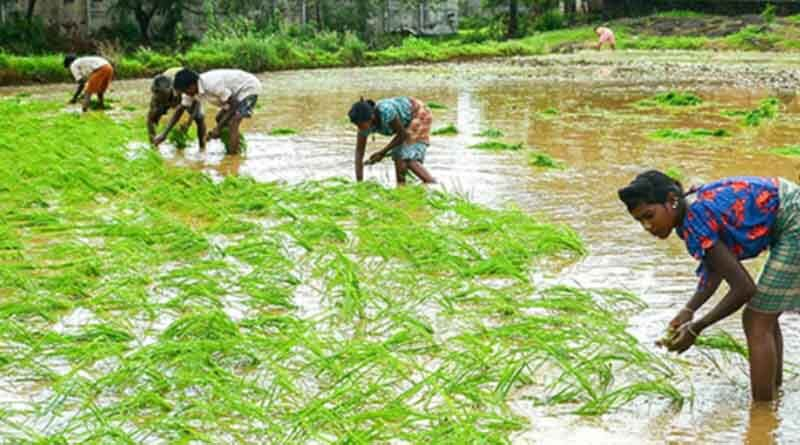 role-of-farmer-producer-organisations-fpos-in-doubling-farmers-income