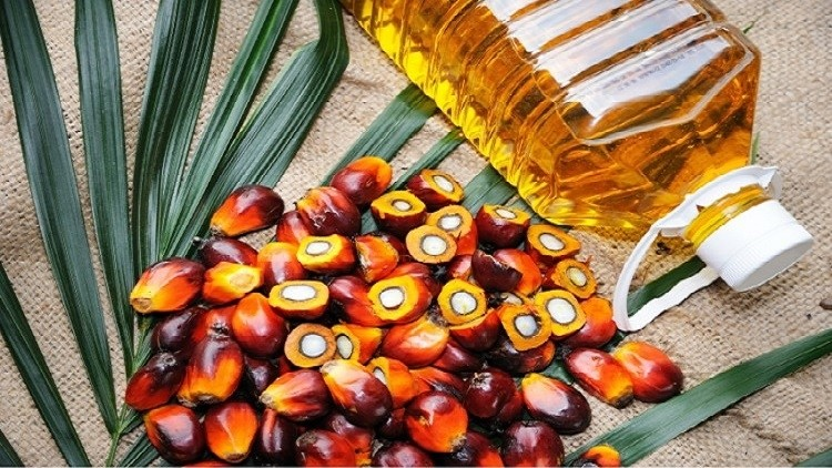 palm-oil-production-in-india