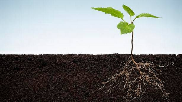 soil-microbes-can-make-for-a-greener-revolution