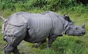 rhino-horn-burning-ceremony