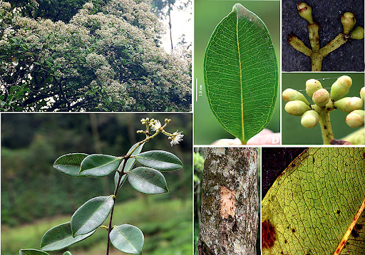 western-ghats-offer-major-additions-to-flora