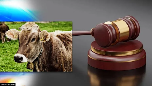 declare-cow-the-national-animal-says-allahabad-hc