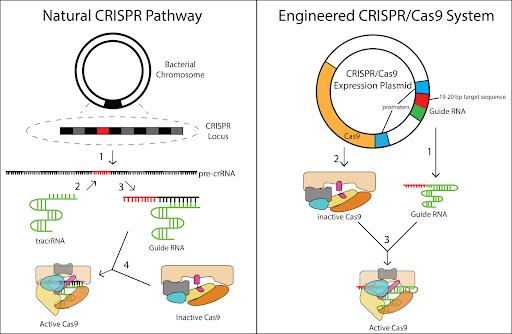 gene-editing-guidelines-facing-delay