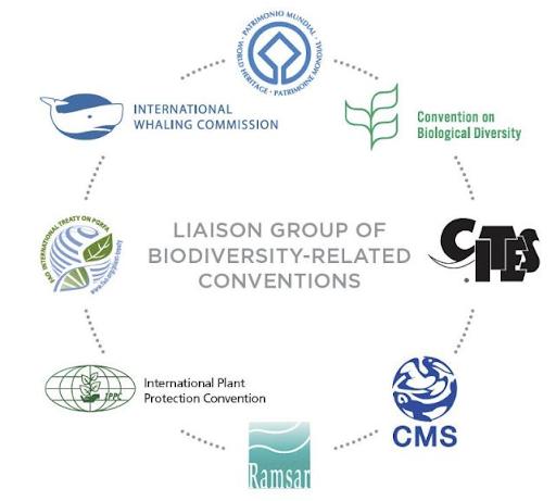 china-launches-biodiversity-fund