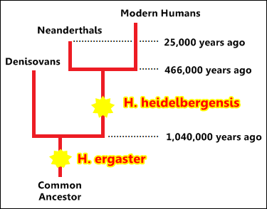 Denisovans and Neandertals